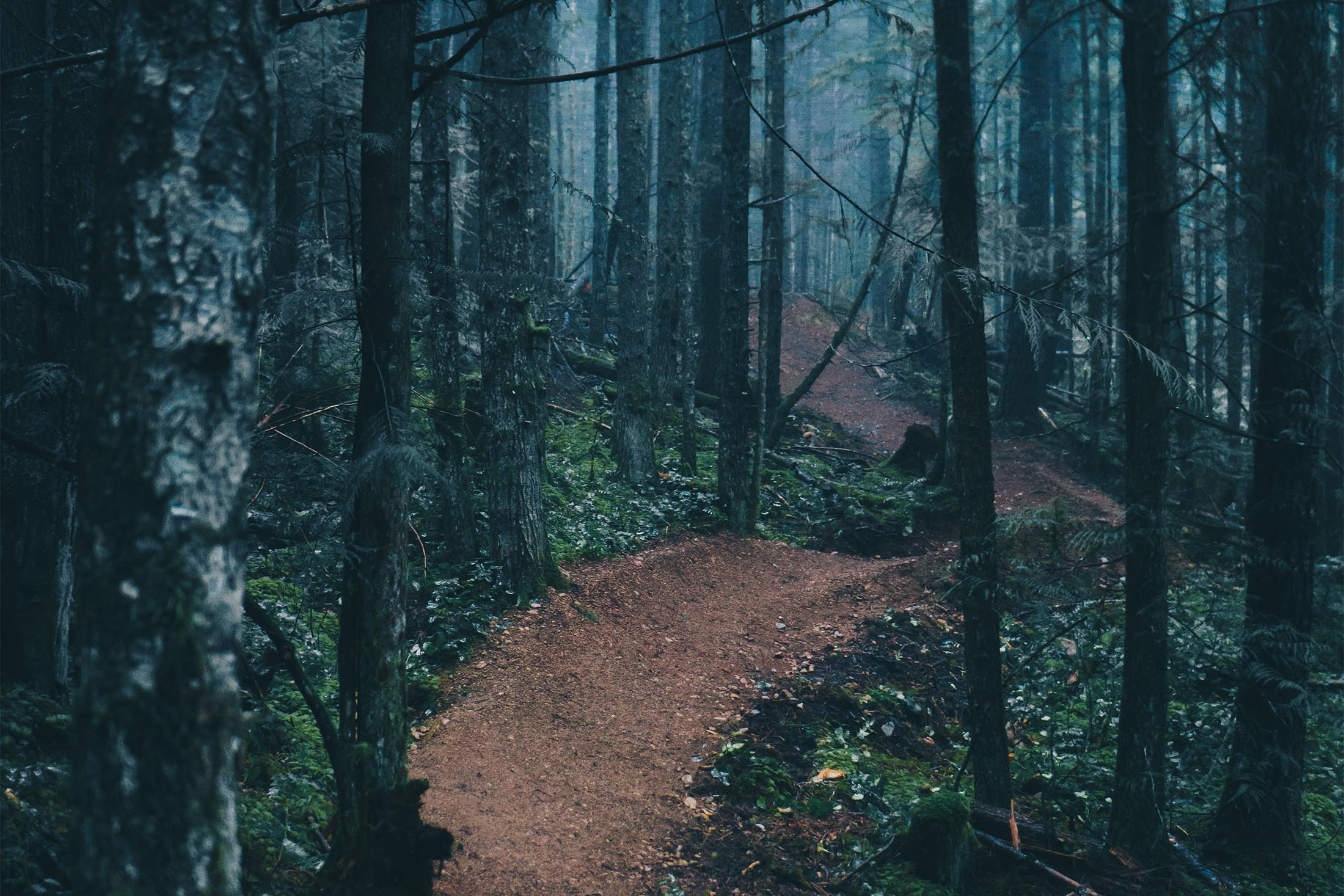 freeride trail in the woods