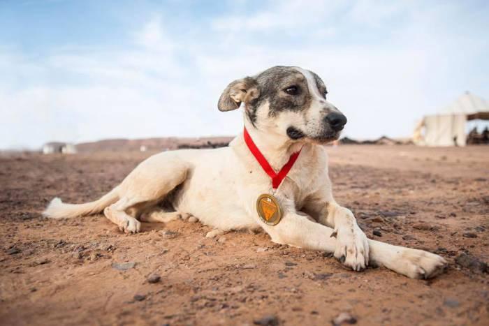 Cactus dog Marathon des Sables