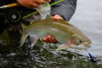 Beginner Fly Fishing Kit: A Budget Fly Rod, Reel, and More