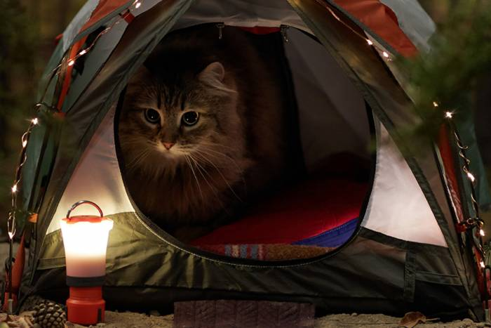 Cat sitting inside miniature tent, miniature lantern in foreground