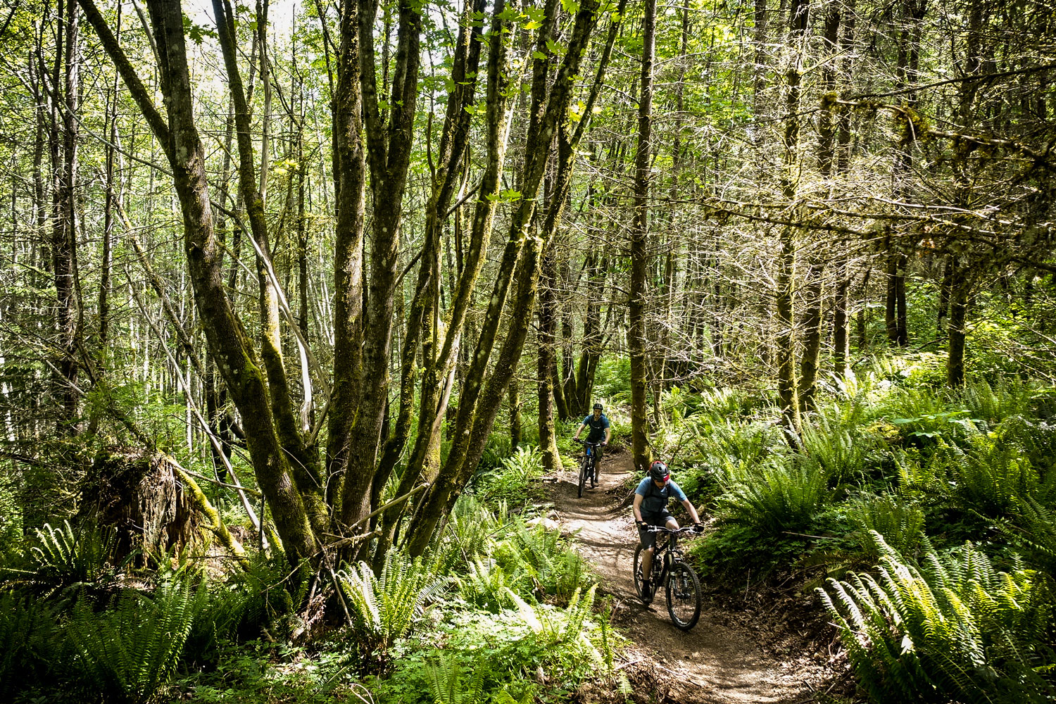 Mountain bikers on Washington's Raging River Trail