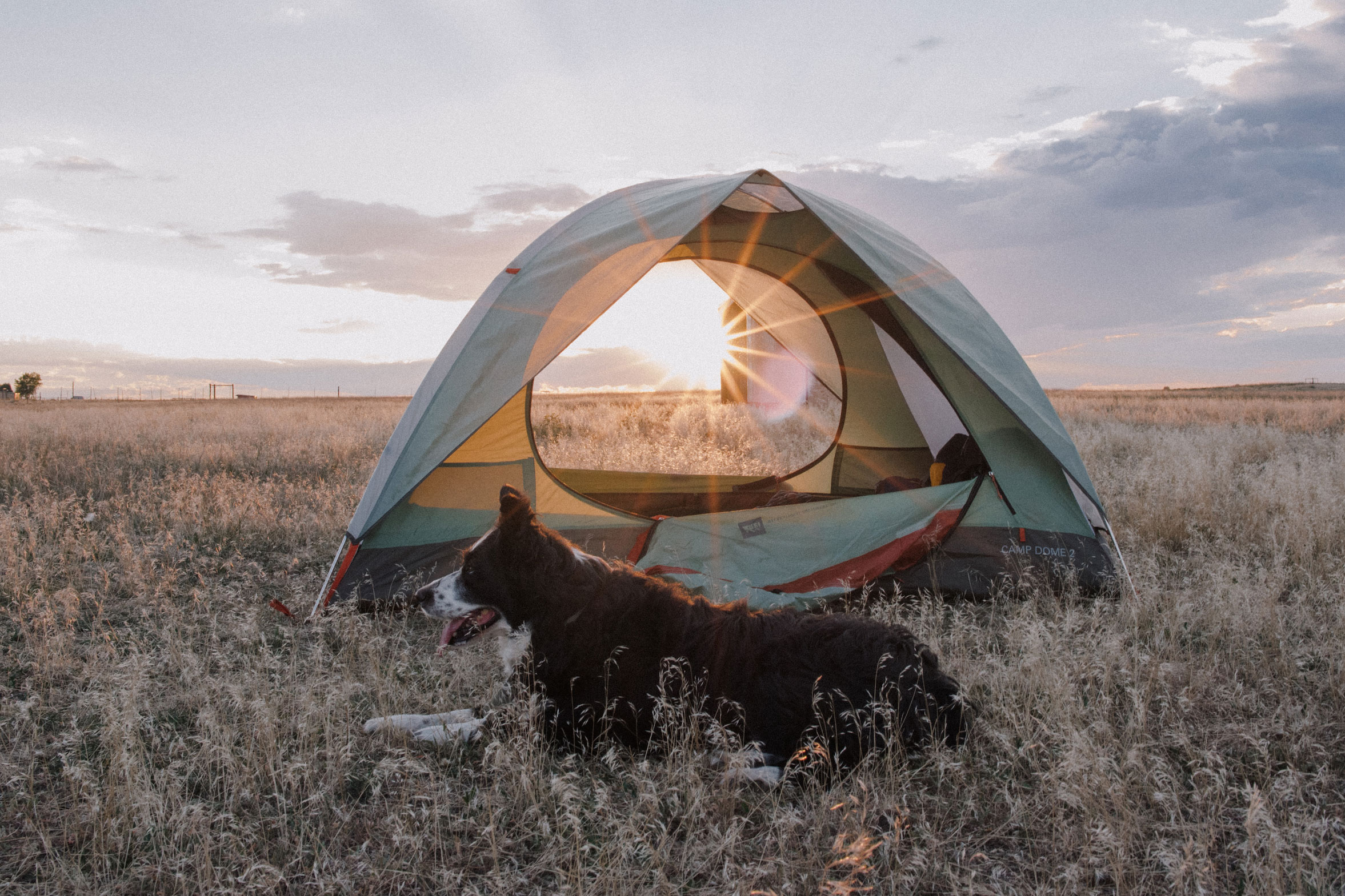 Camping tent with dog at sunset