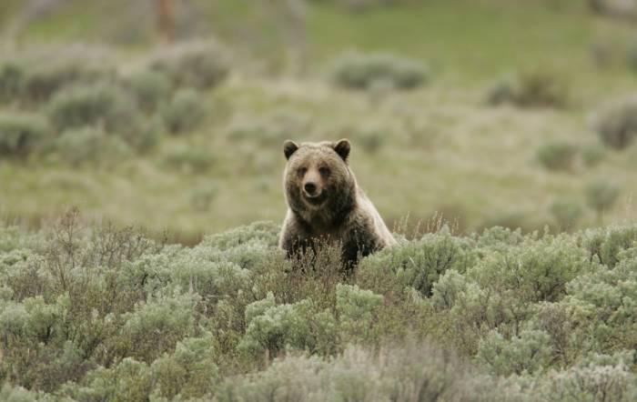 How to Enjoy a Bear Encounter | GearJunkie