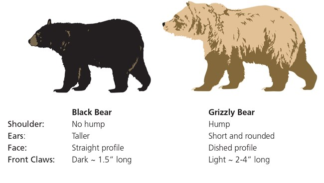 How to Enjoy a Bear Encounter