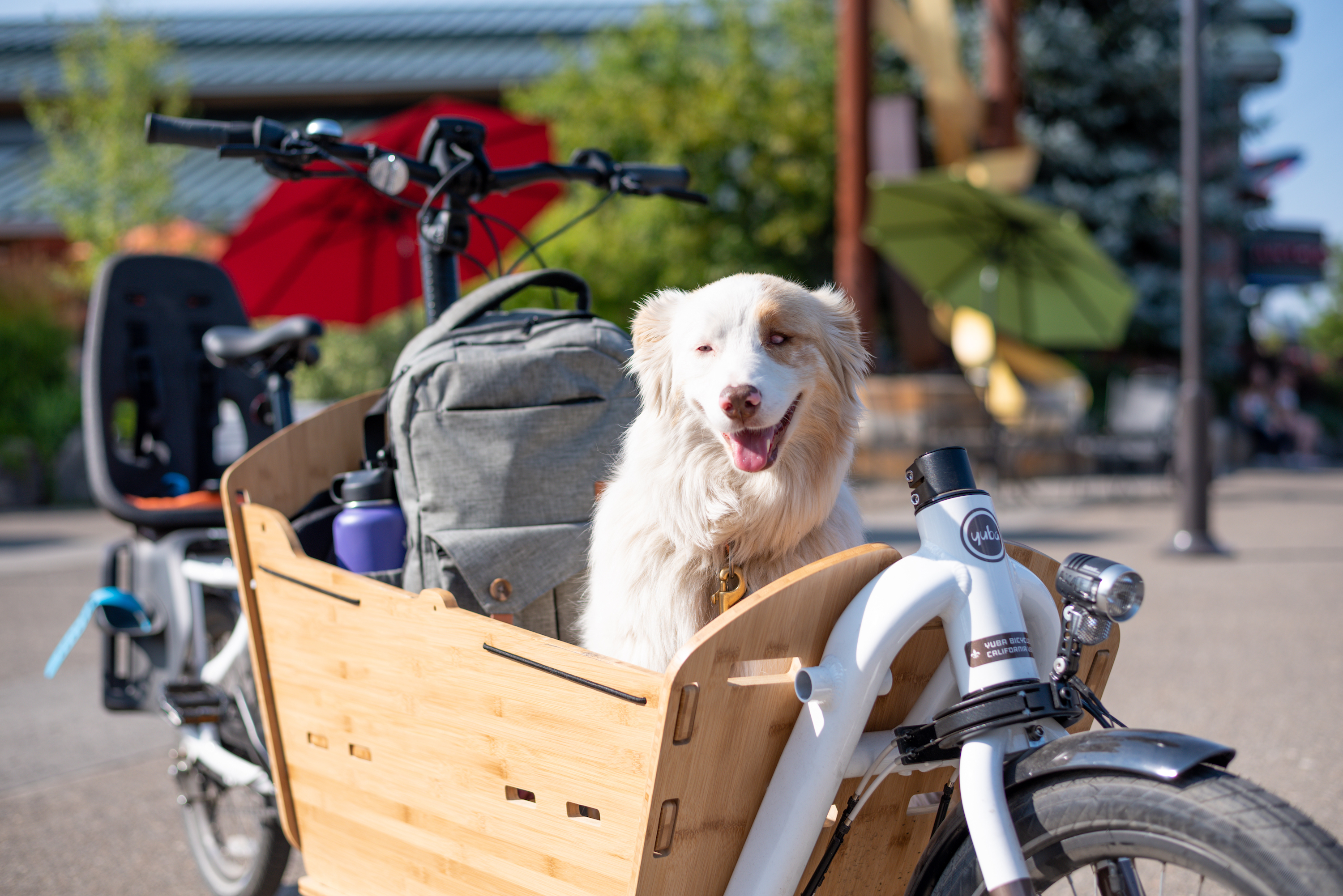 A Happy Dog Goes for a ride in the Yuba Cargo Bike