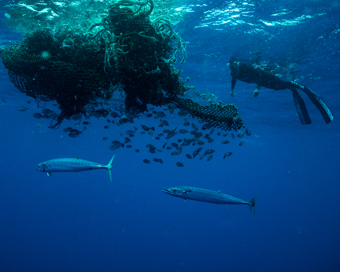 Fish and diver near Ben Lecomte pacific garbage patch