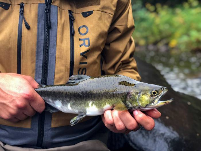 Fly Fisherman Holding Pink Salmon Fish River