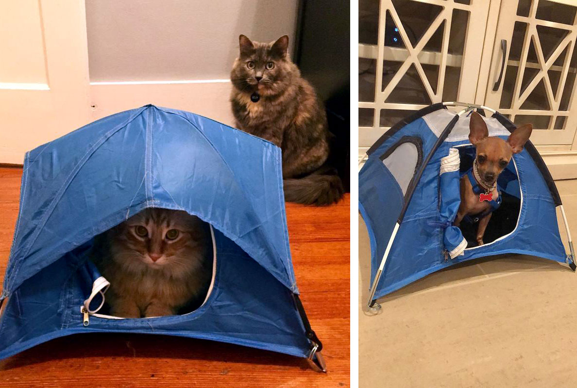 Tiny Tent cat and chihuahua