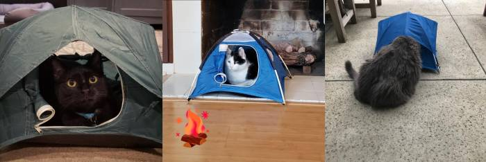 cats-in-tiny-tents