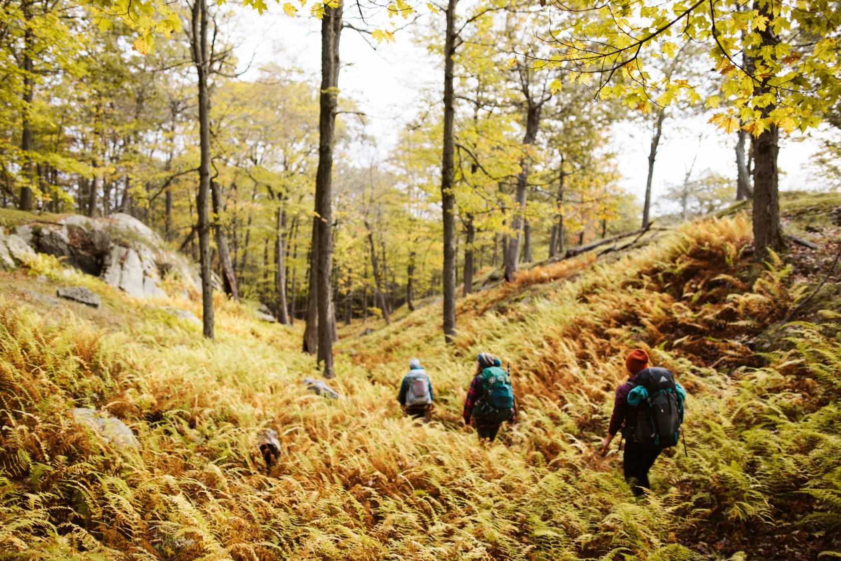 Hikers walking on trail