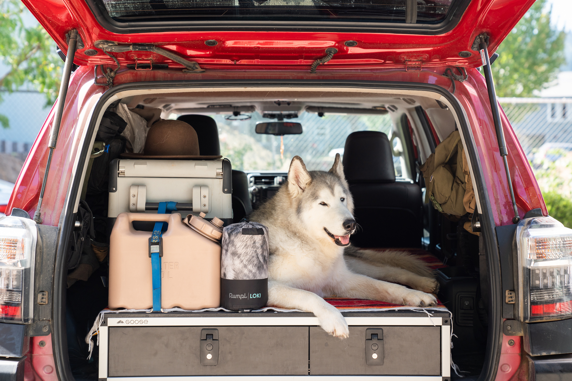 Rumpl dog blanket with Loki husky sitting in back of car with gear and trunk open