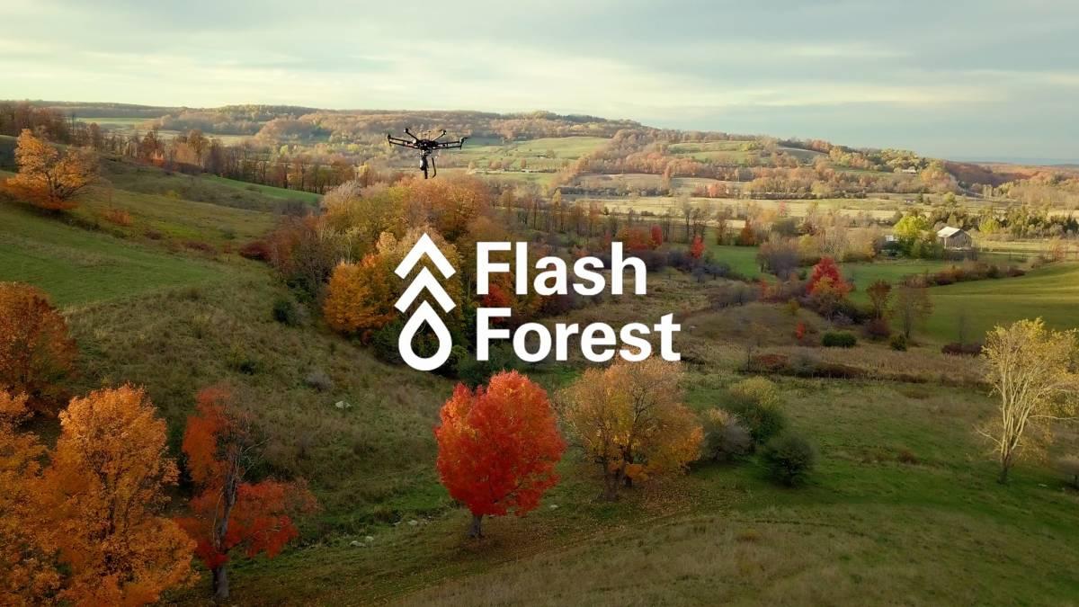 Flash Forest logo, Canada