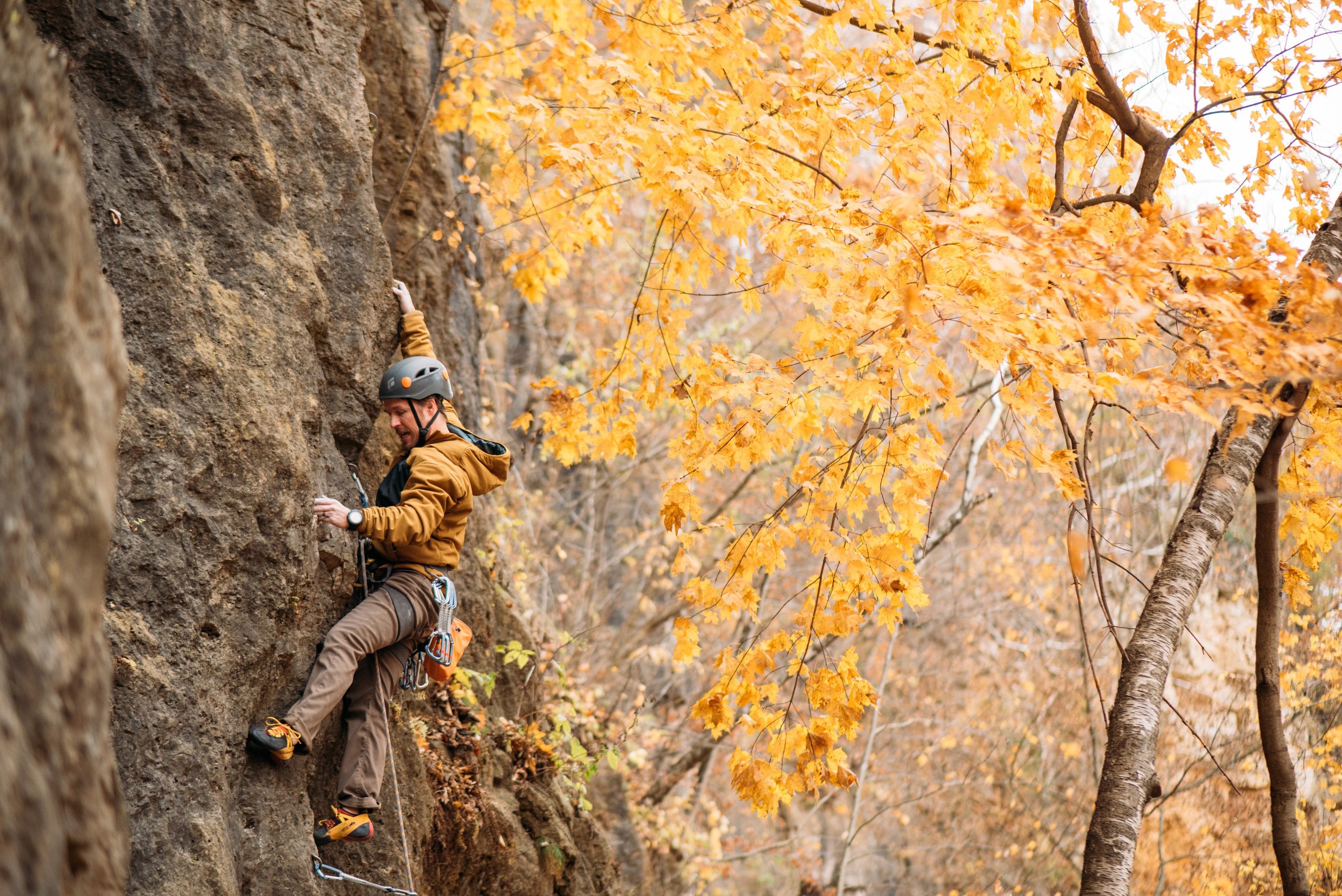 A man Lead Rock Climbing in the fall next to vibrant yellow-leaved Aspen