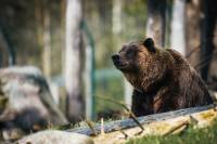 Bear Safety in the Backcountry