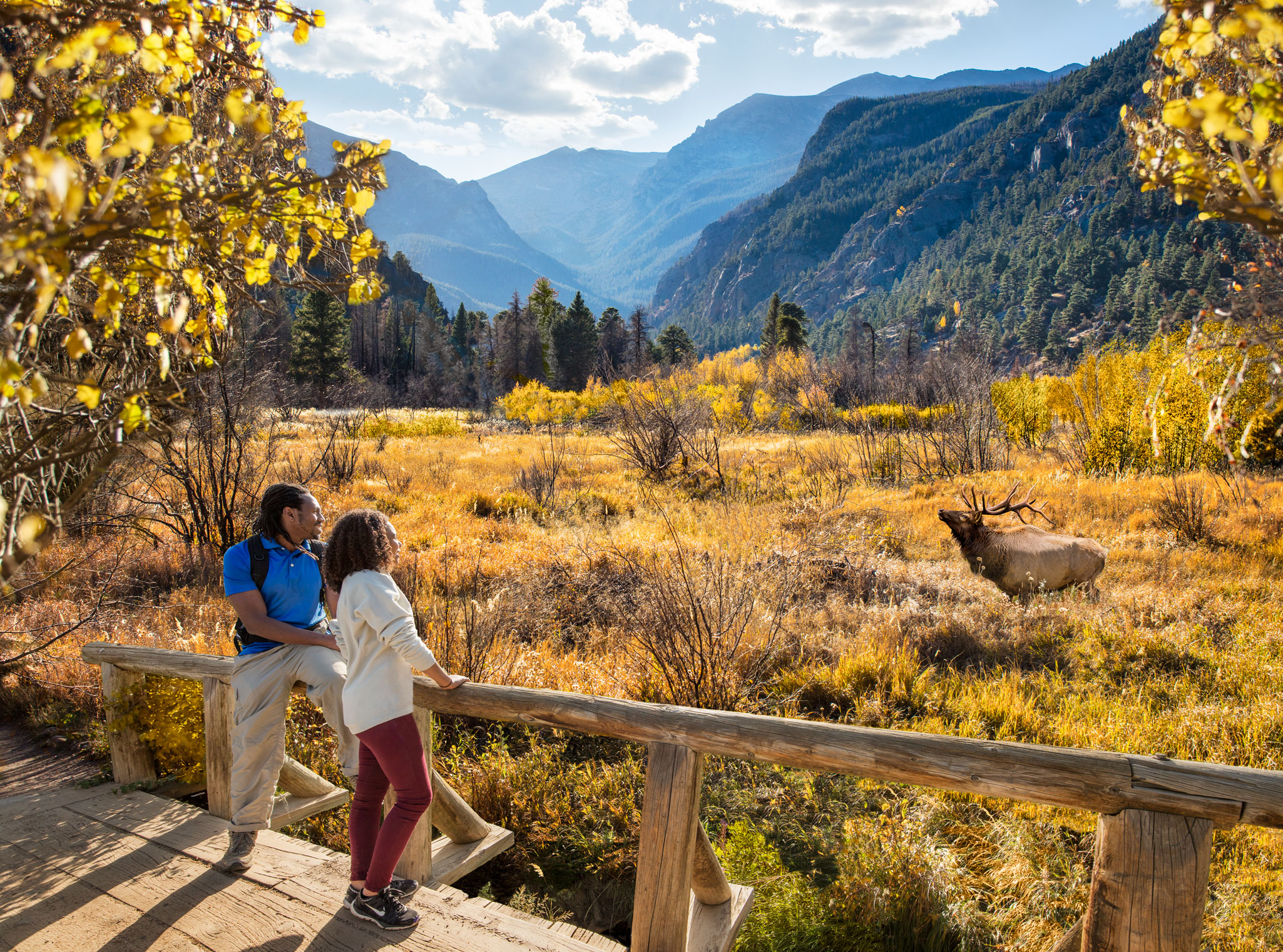 Visit Estes Park Elk