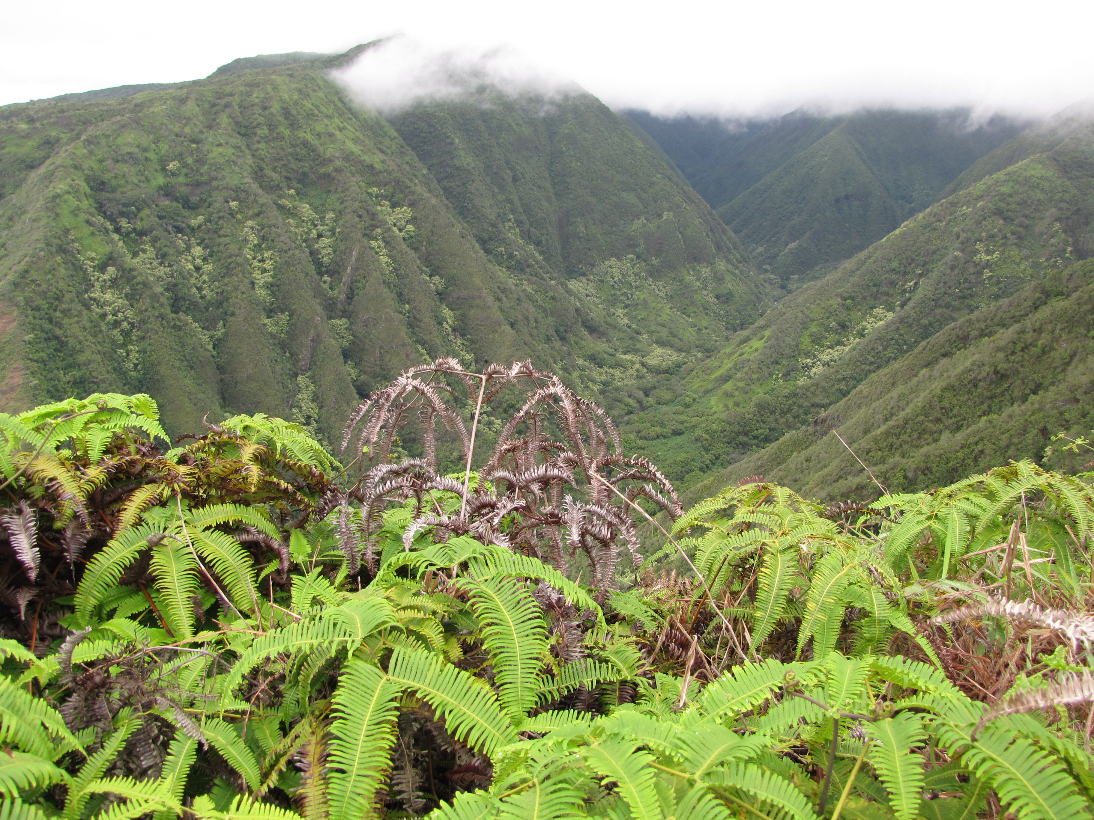 Waihee Ridge Trail, West Maui Forest Reserve