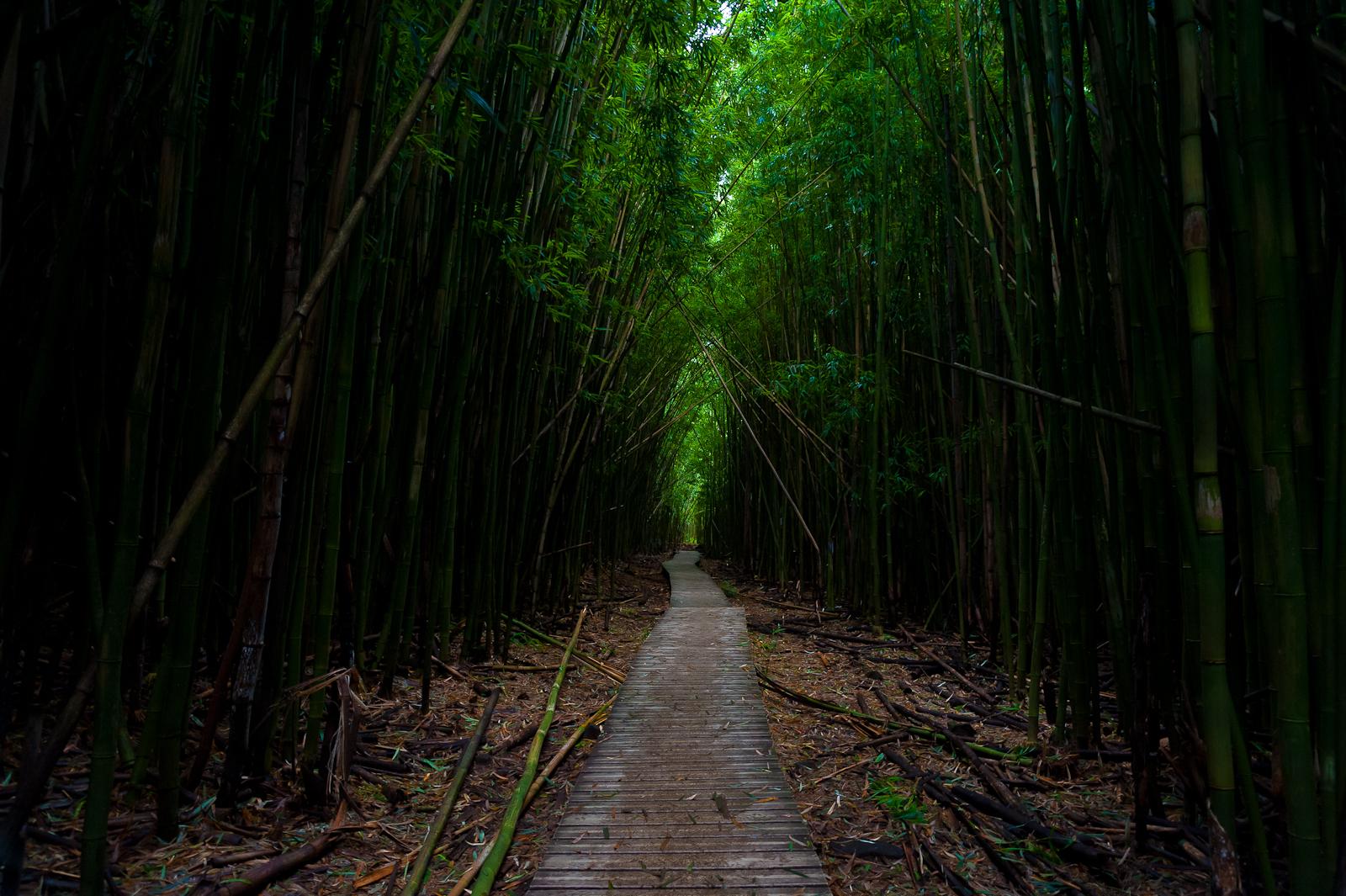 Pipiwai Trail, Kipahulu District of Haleakala National Park