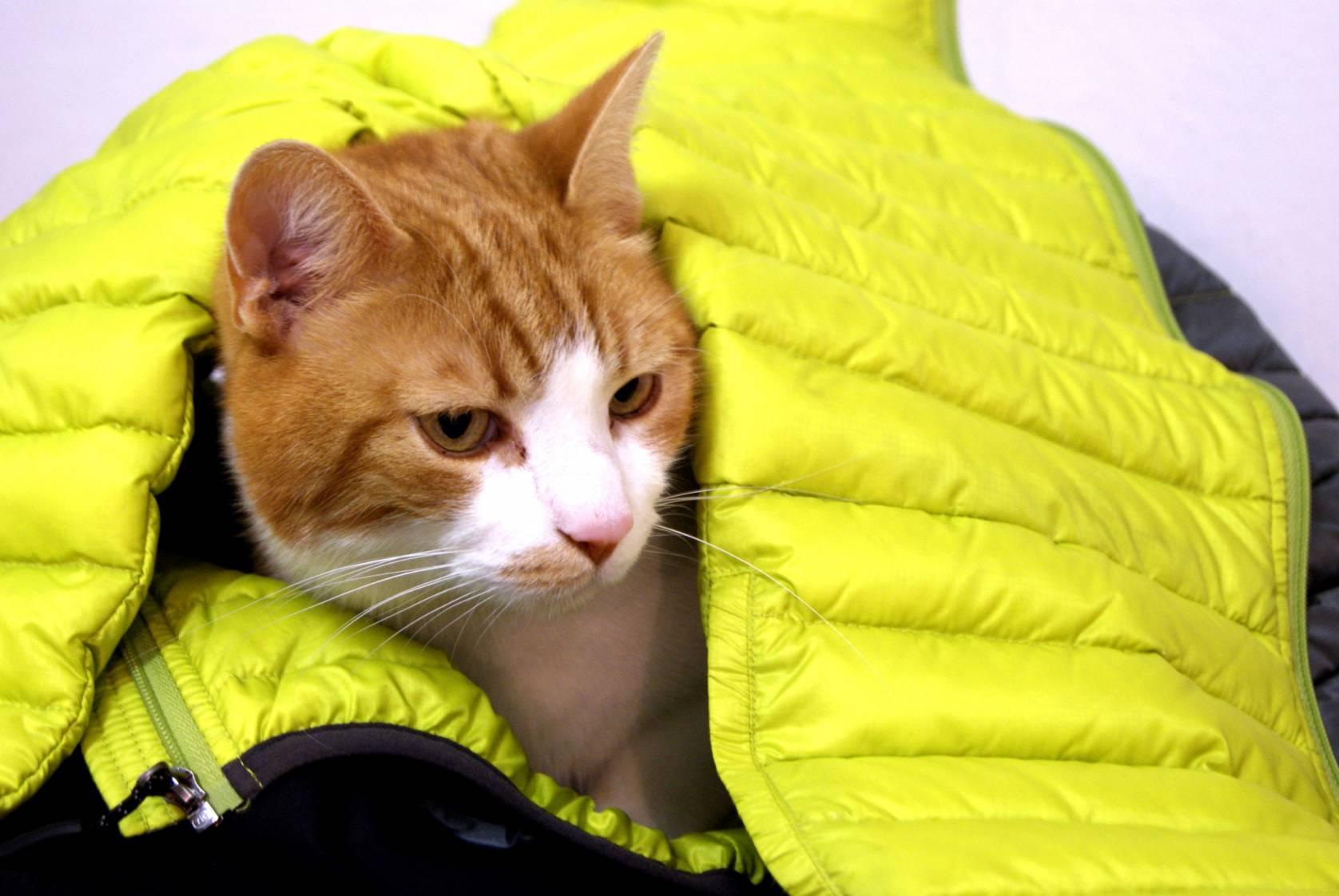 Cat inside down jacket