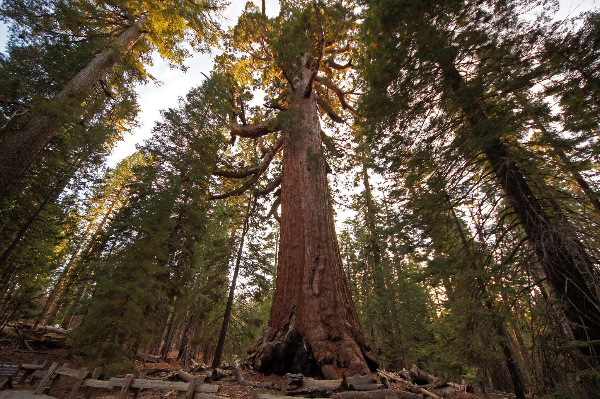 Mariposa Sequoia Yosemite Best Hikes