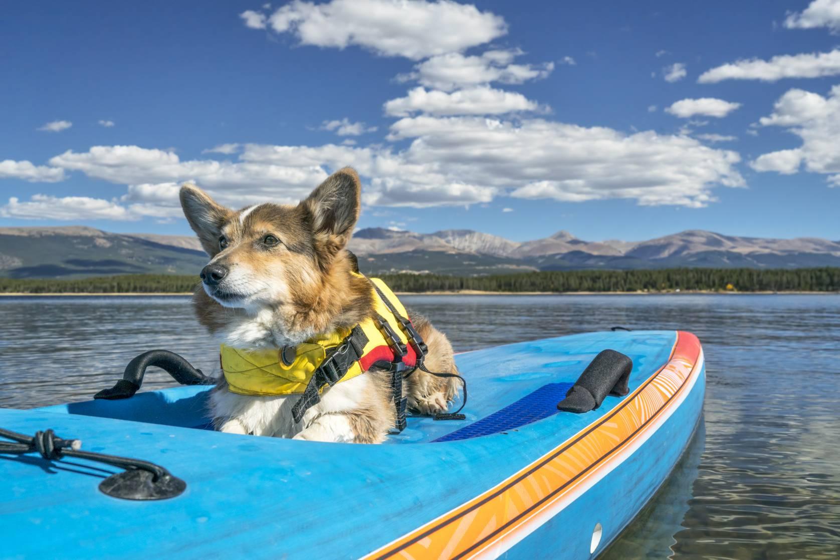 best dog life jackets of 2020