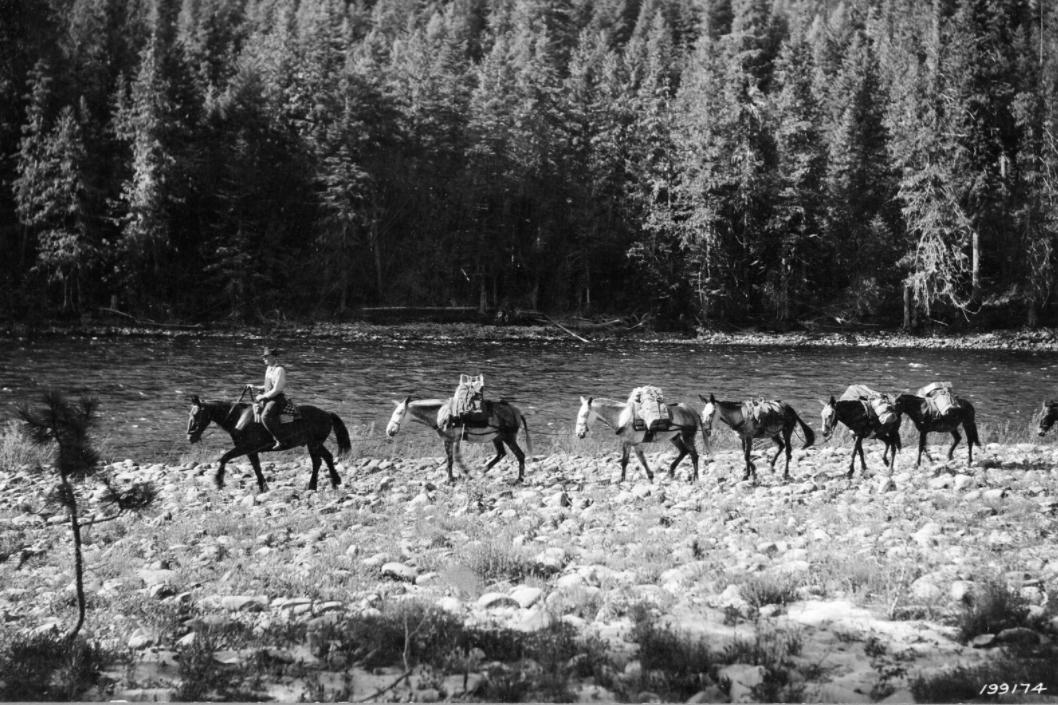 forest service mule train