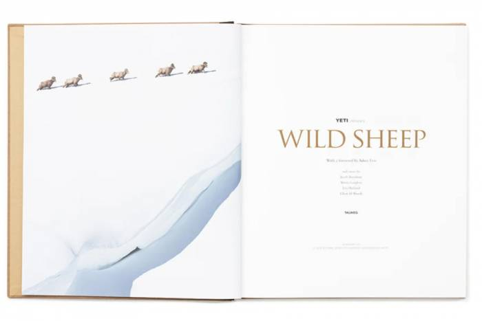 wild sheep the book