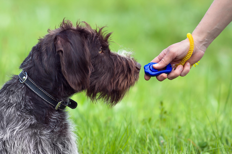 clicker training, puppy starter kit