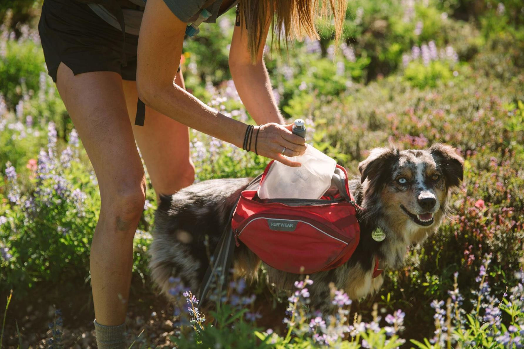 adding items to dog's backpack