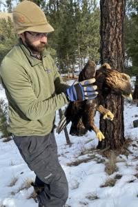 poisoned eagle
