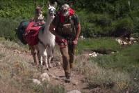 argali outdoors llama