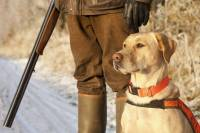 Hunter with rifle next to yellow labrador dog