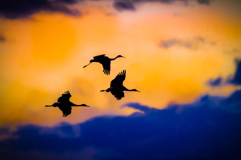 Migratory Bird Treaty Act