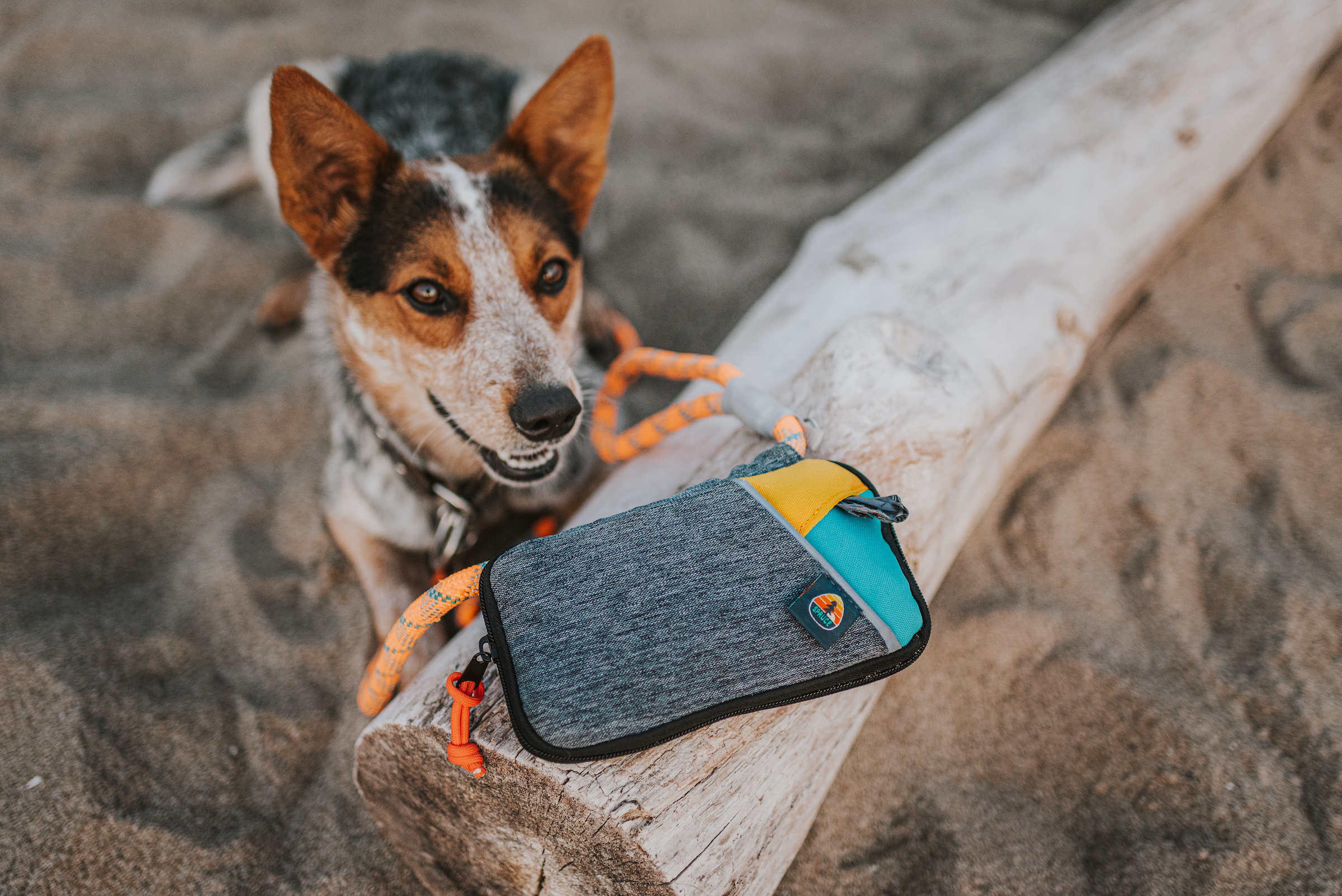 Spruce leash bag gear on log with dog looking at it