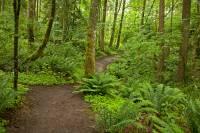 forest green trail in Bellingham, Washington