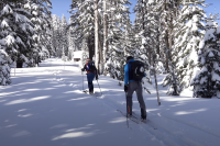 two skiers skinning up very snowy trail