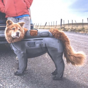 Orvis Dog PRO Waders
