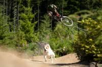Sendero para bicicleta de montaña Shimano Dog Running