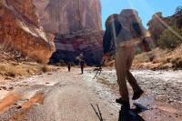 Hiker walking with trekking poles