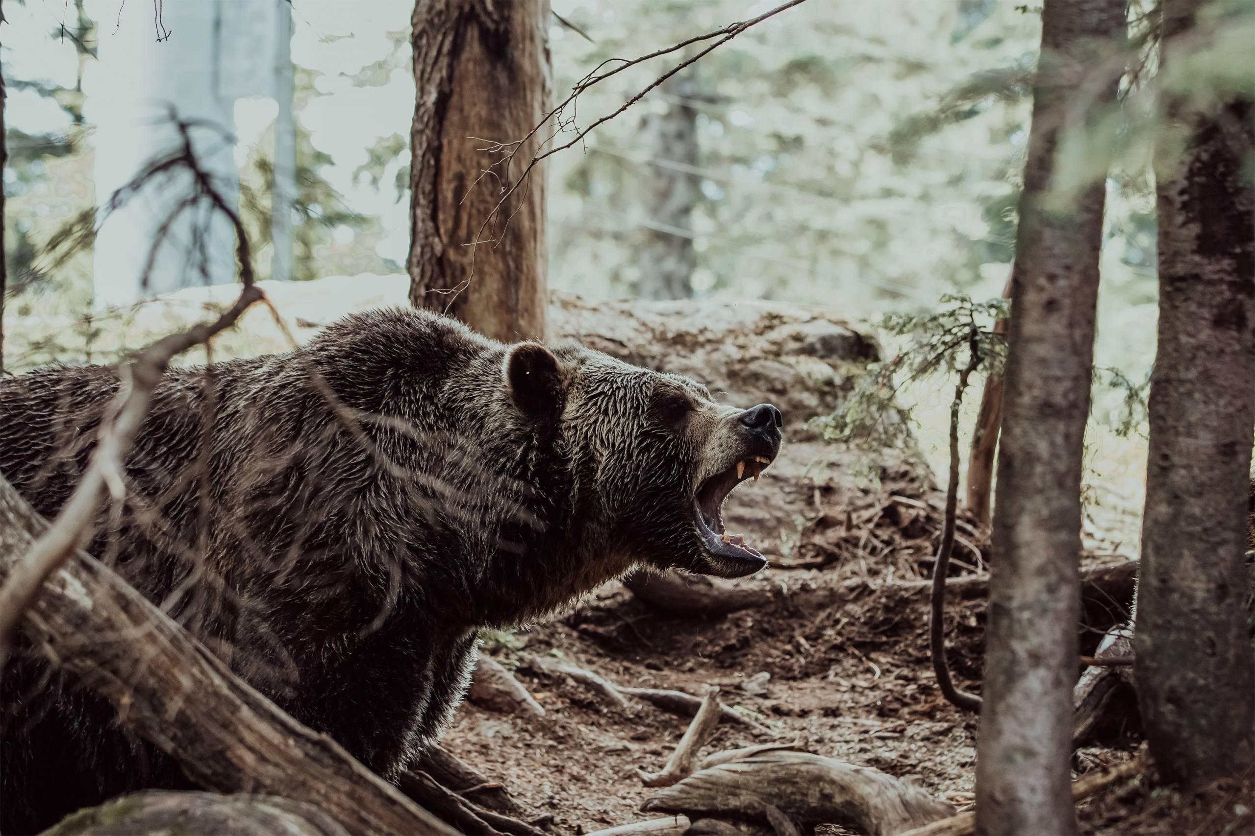 Counter-Assault-Bear_Spray_Video