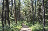 forest trees bathed in sunlight with narrow path below