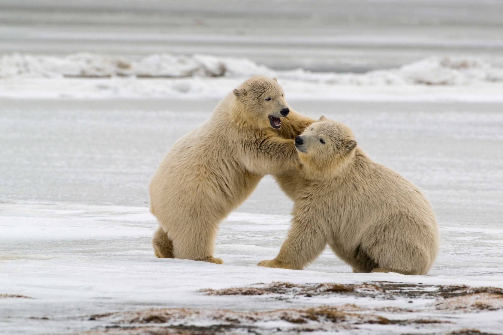 arctic national wildlife refuge drilling