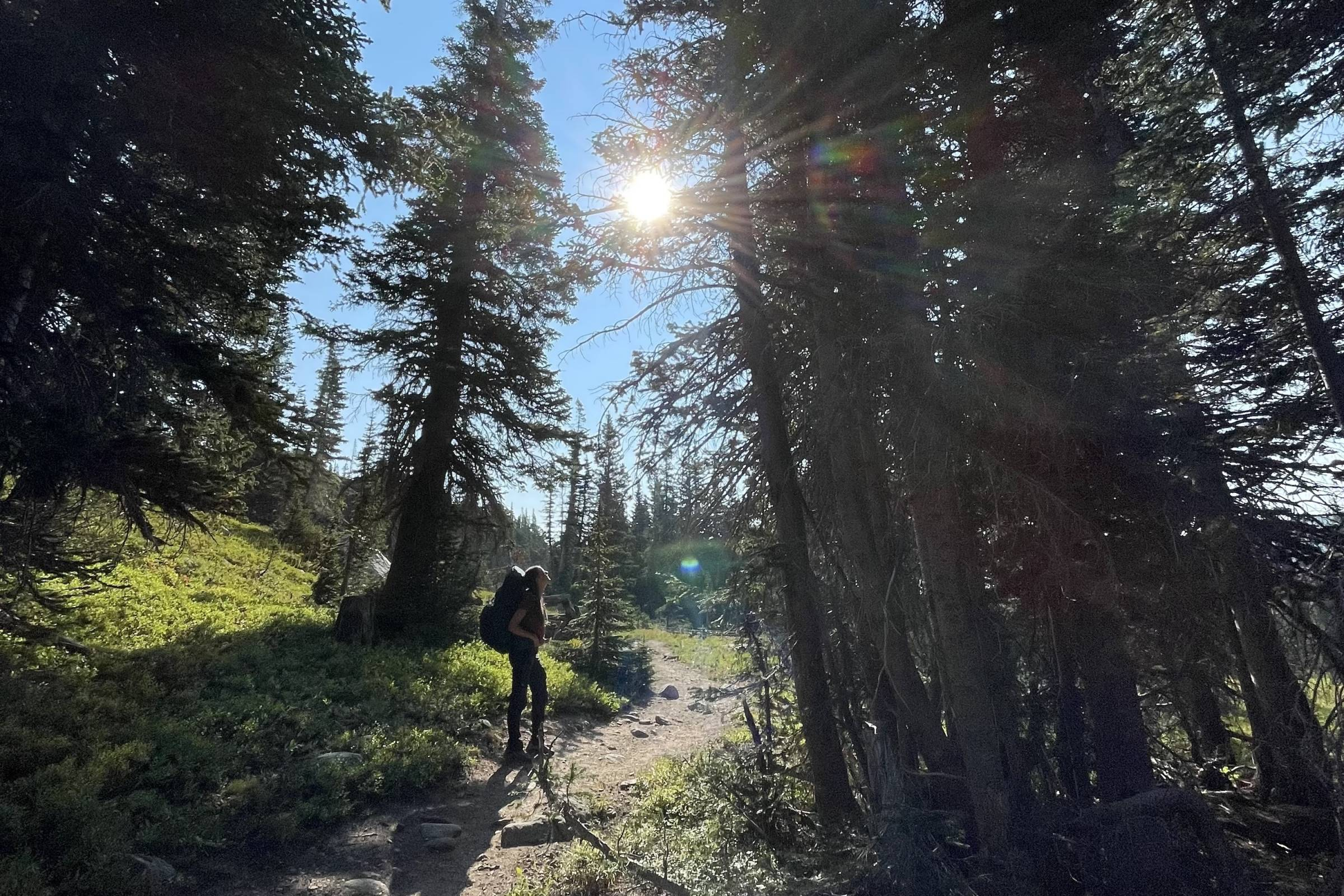 a female hiker wearing a backpack standing on a dirt singletrack trail and gazing up at large pine trees