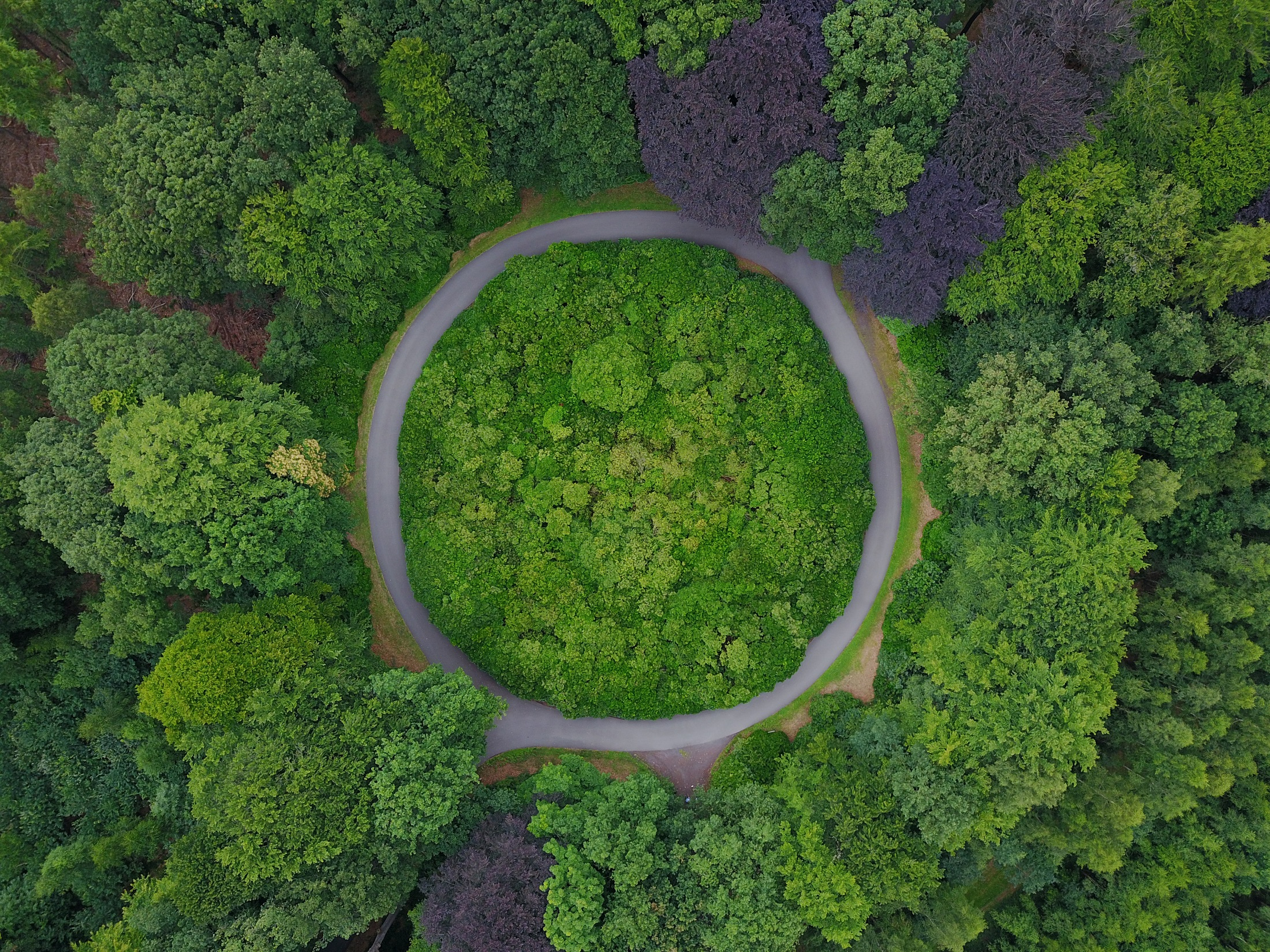 Trees and a roundabout. TNF and Spinnova hope to use the tree-derived fiber to inspire a more circular green economy.