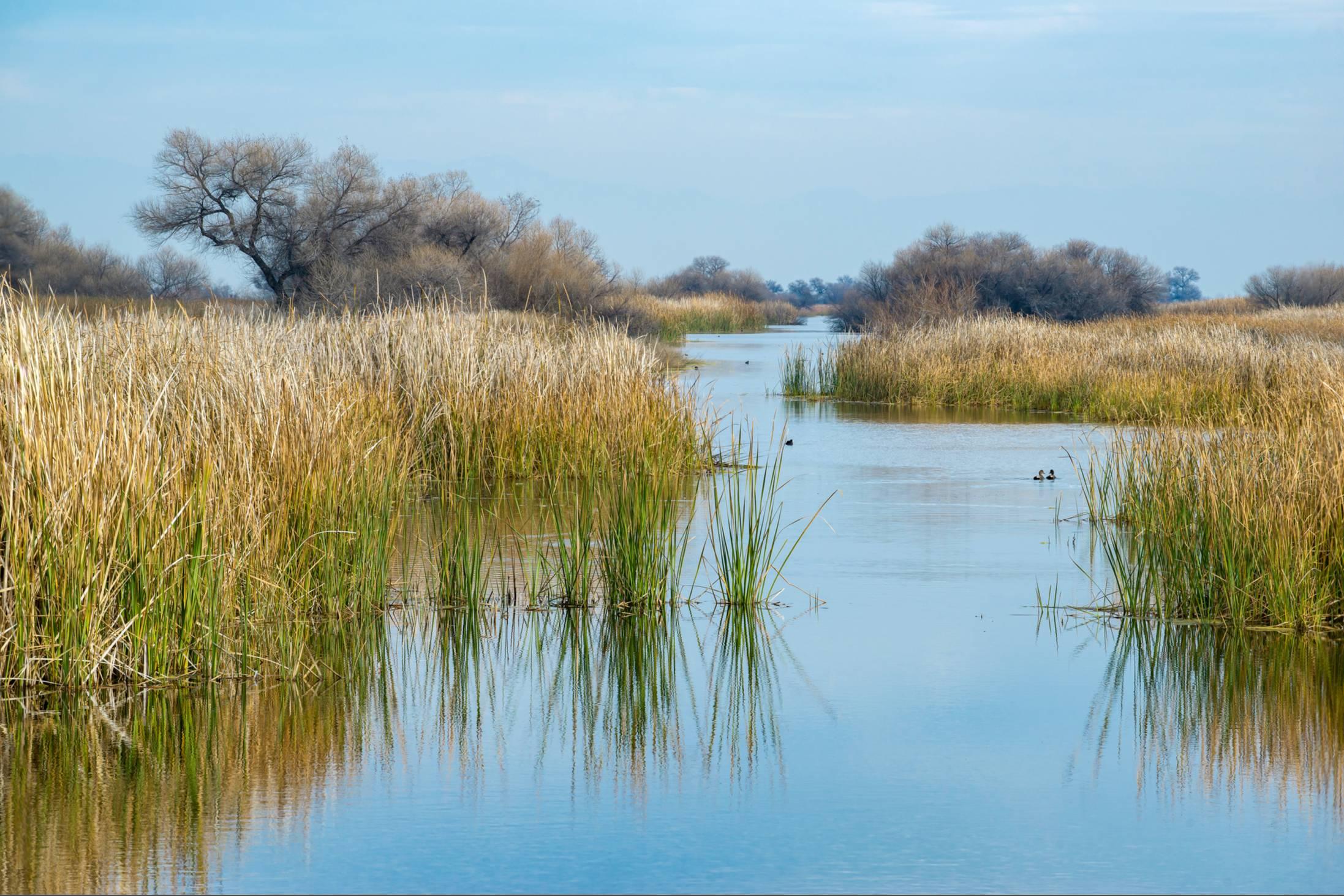 Wildlife refuge near the San Joaquins, CA, USA.