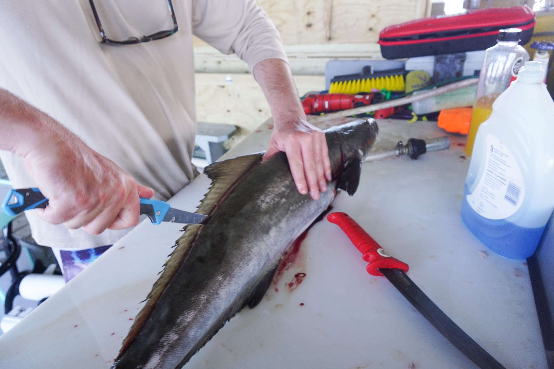 gerber saltwater fillet knives