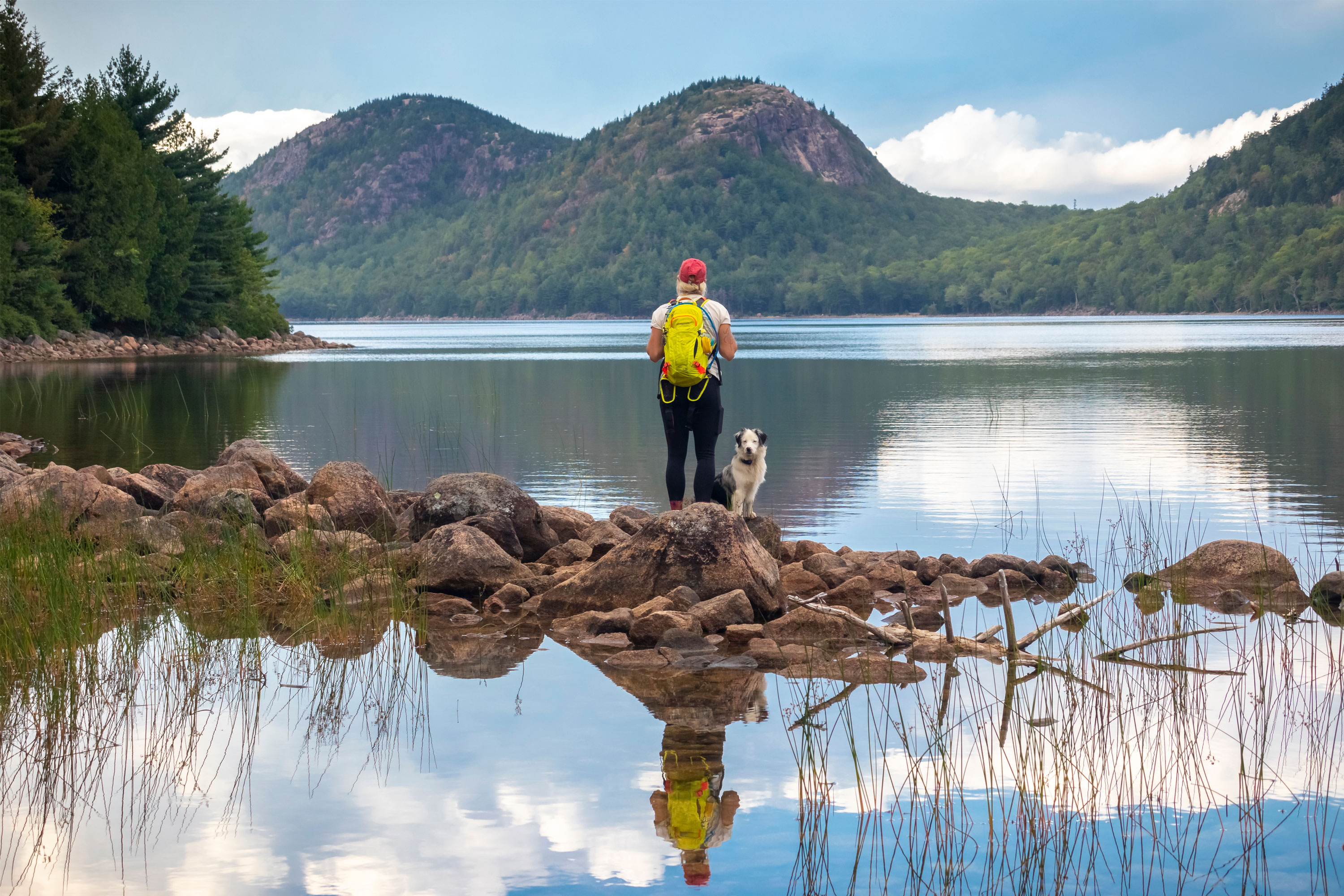 The 7 Best National Parks to Visit With Dogs