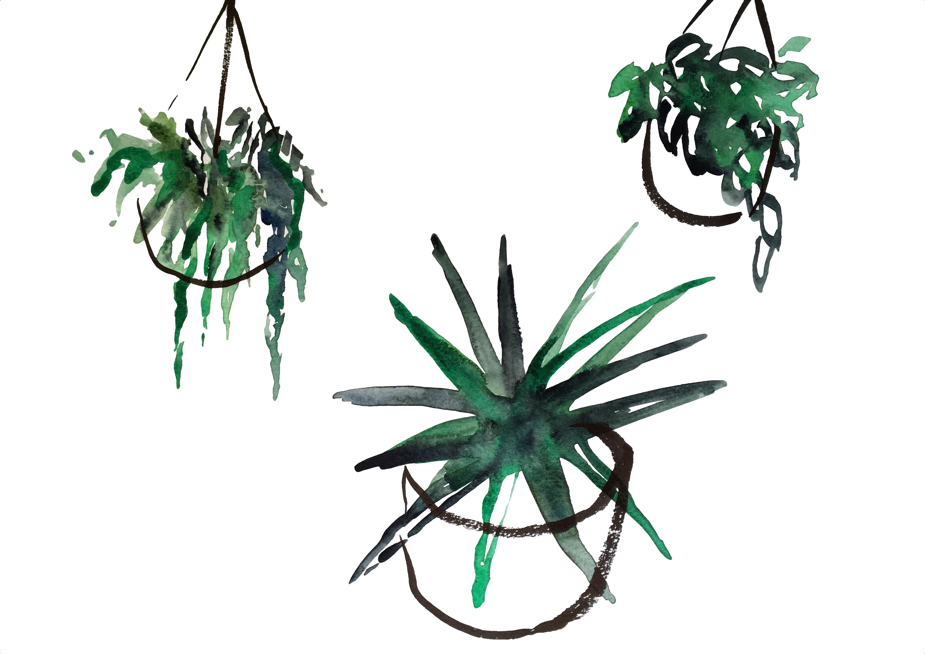 Hanging planters and aloe
