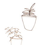 Two potted plants