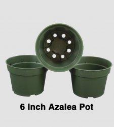 6 inch Azalea Pot - Each or Case