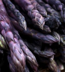 Asparagus Purple Passion Bare Root - 2 Yr Old